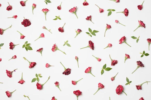 Composição de maravilhosas flores vermelhas e folhas verdes