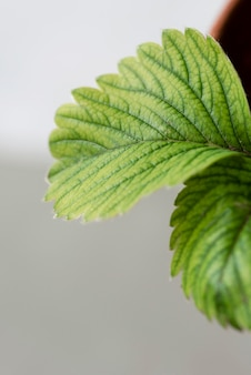 Composição de natureza morta de planta verde dentro de casa