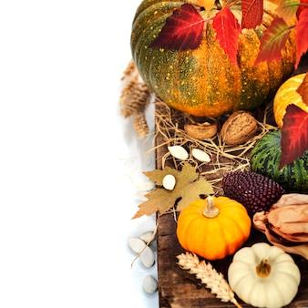 Composição de outono. abóboras e milho na velha mesa de madeira. conceito do dia de ação de graças