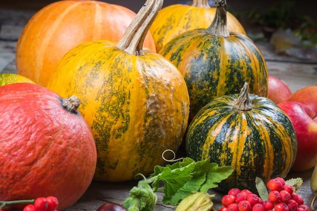 Composição de outono com diferentes abóboras, folhas de outono, castanhas, bagas de rowan, maçãs e peras e frutos silvestres de rosas. conceito de colheita de outono