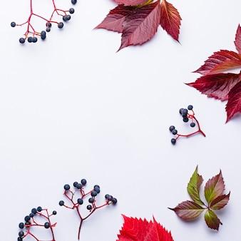 Composição de outono com uva selvagem e folhas vermelhas em cinza claro