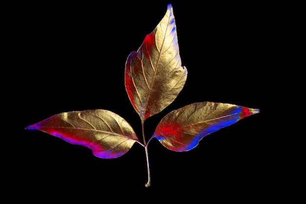 Composição de outono de diferentes folhas douradas em um preto