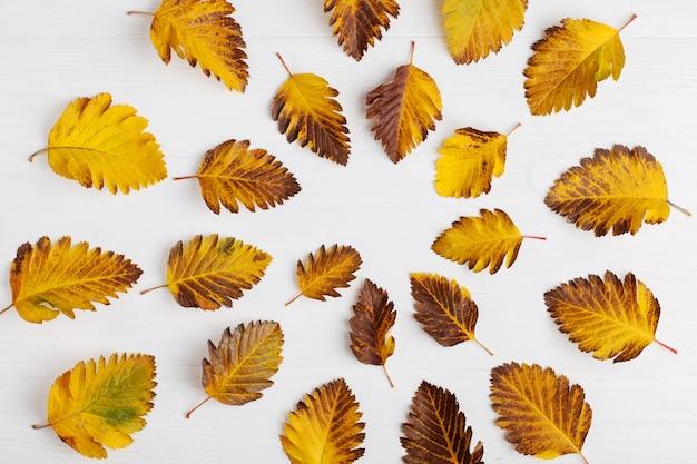 Composição de outono de folhas em um fundo branco.