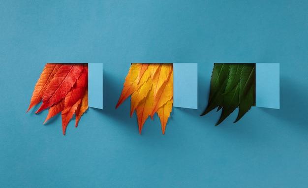 Composição de outono de folhas multicoloridas saindo de janelas de papel abertas sobre um fundo azul.