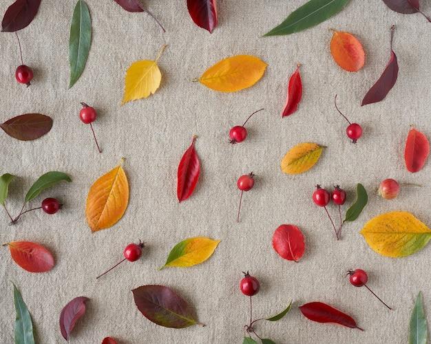 Composição de outono de frutas silvestres, pequenas maçãs silvestres, bolotas e folhas