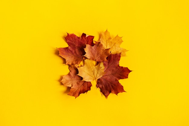 Composição de outono é feita sob a forma de um quadrado forrado com folhas de bordo brilhantes