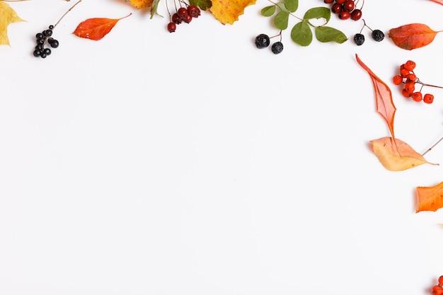 Composição de outono feita de folhas coloridas secas de outono e bagas de chokeberry, rowanberry, espinheiro no fundo branco. outono, conceito de outono. camada plana, vista superior, espaço de cópia