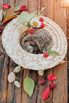 Composição de outono. o ouriço encontra-se em um chapéu de palha com flores e frutos silvestres.