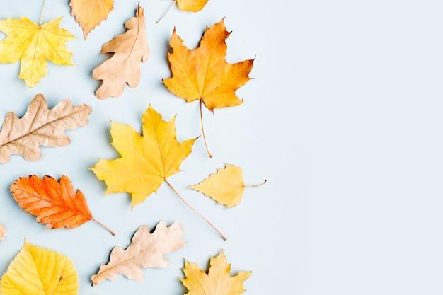 Composição de outono. padrão feito de folhas de outono em fundo azul. camada plana, vista superior, espaço de cópia