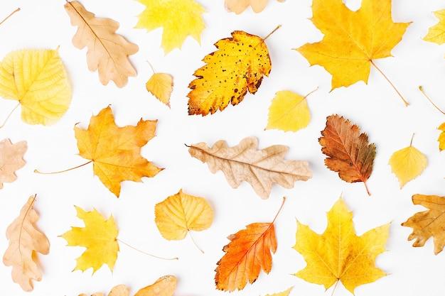Composição de outono. padrão feito de folhas de outono em fundo branco. camada plana, vista superior, espaço de cópia