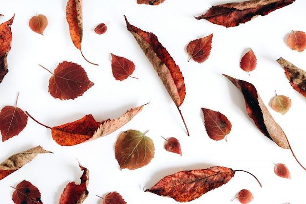 Composição de outono. padrão sem emenda de folhas secas