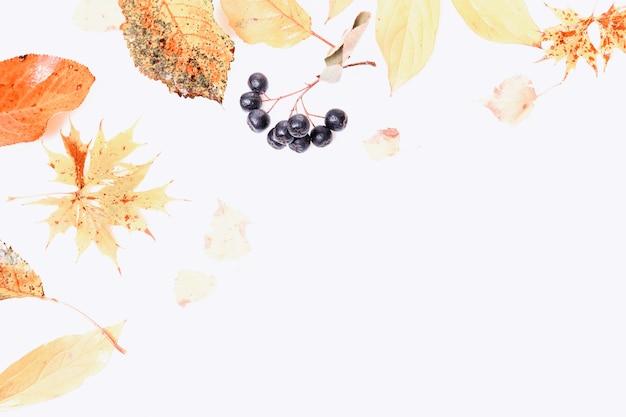 Composição de outono. quadro feito de folhas coloridas secas de outono e bagas de chokeberry em fundo branco. outono, conceito de outono.