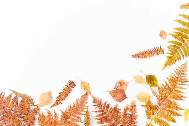 Composição de outono. quadro feito de folhas coloridas secas de outono e flores sobre fundo branco. outono, conceito de outono. camada plana, vista superior, espaço de cópia
