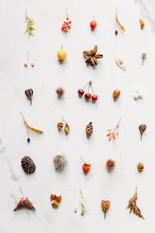 Composição de outono. vista superior de frutos silvestres de outono, inflorescências, brincos de bordo e tília, castanha espinhosa, avelã, bolota, cone, framboesa, cones de lúpulo na superfície de mármore branco. postura plana.