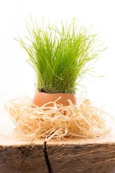 Composição de páscoa de casca de ovo de grama verde.