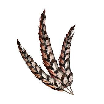 Composição de penas de três aves faisão realistas. ilustração em aquarela.