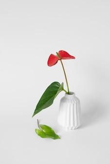 Composição de planta tropical mínima de vista frontal