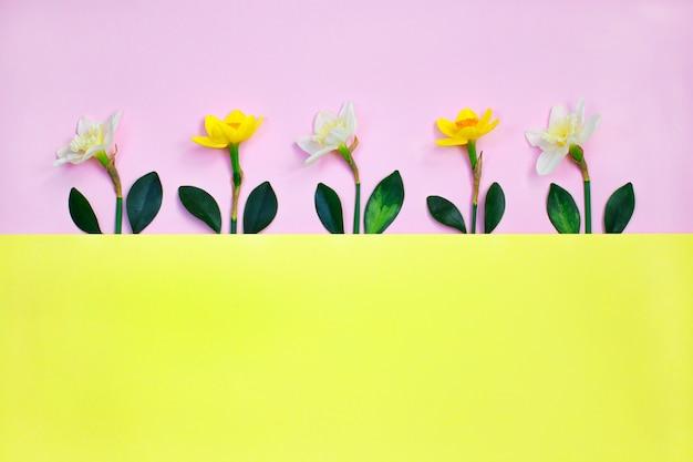 Composição de primavera feita com flores de narciso e folha