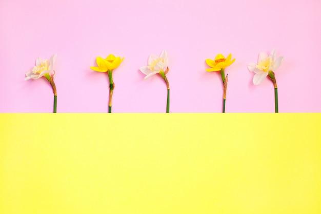 Composição de primavera feita com flores de narciso
