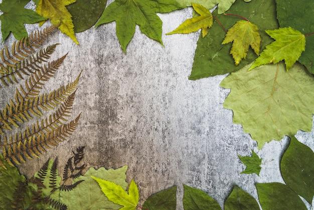 Composição de quadro com várias folhas e samambaia