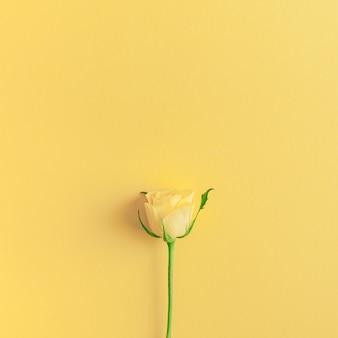 Composição de rosas amarelas frescas