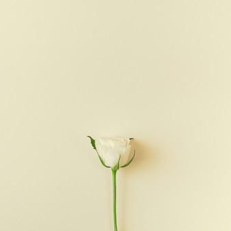Composição de rosas brancas frescas