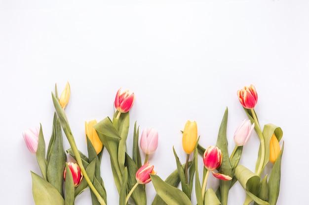 Composição de tulipas brilhantes frescas com folhas verdes