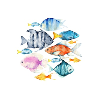 Composição de vários tipos de peixes marinhos