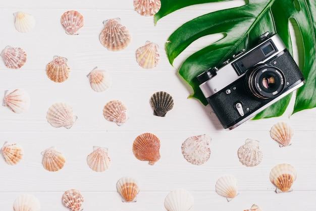 Composição de verão com câmera e conchas