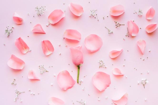 Composição delicada de pétalas cor de rosa e pequenas flores brancas em um fundo rosa
