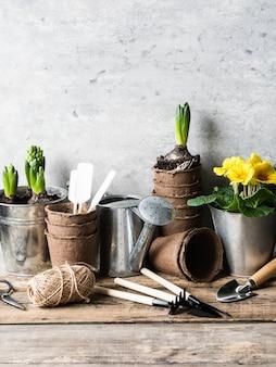 Composição do jardim com jacintos e prímula em uma panelas e ferramentas de jardim na mesa de madeira rústica