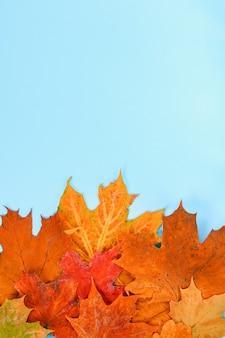 Composição do outono: folhas de bordo brilhantes sobre um fundo azul com um bloco de notas branco.