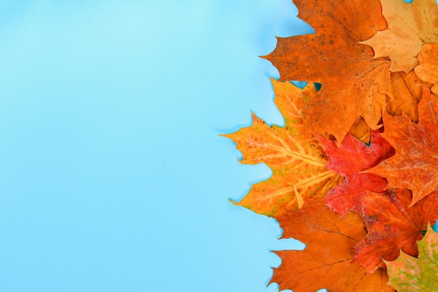 Composição do outono: folhas de plátano brilhantes em um fundo azul com um bloco de notas branco. copiar sp