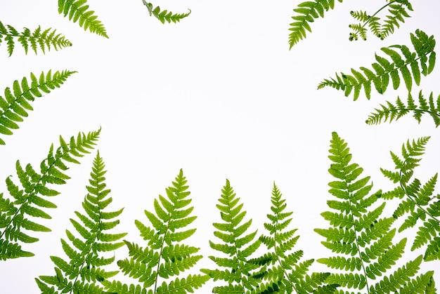 Composição floral com espaço de cópia no centro. folhas verdes da samambaia no fundo branco, aromaterapia, conceito natural verde dos cosméticos. vista plana leiga, superior.