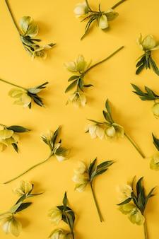 Composição floral com padrão de flores de heléboro amarelo