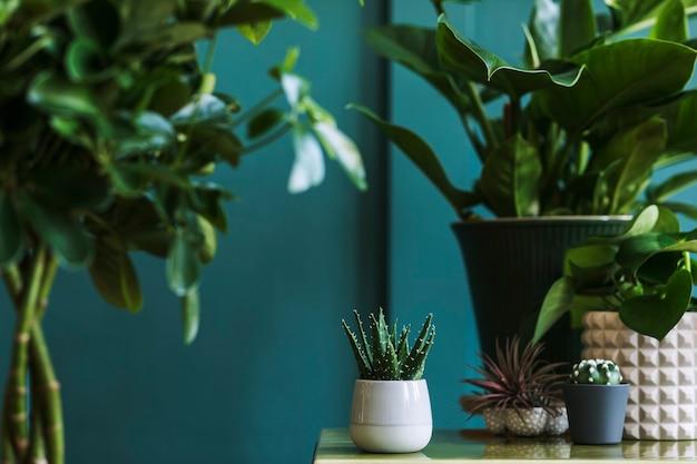 Composição floral elegante com belas plantas, cactos e suculentas em vasos de design e hipster na mesa de centro. sala de estar natural. paredes verdes. conceito de jardinagem doméstica.