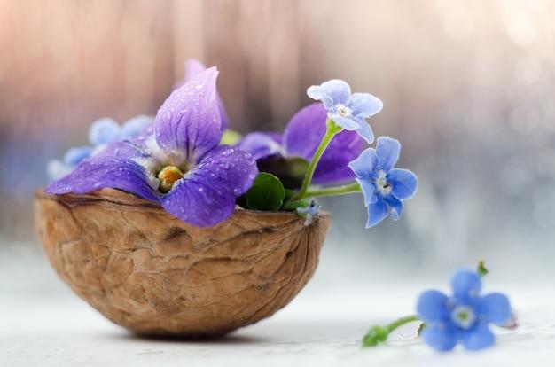 Composição florística com violetas