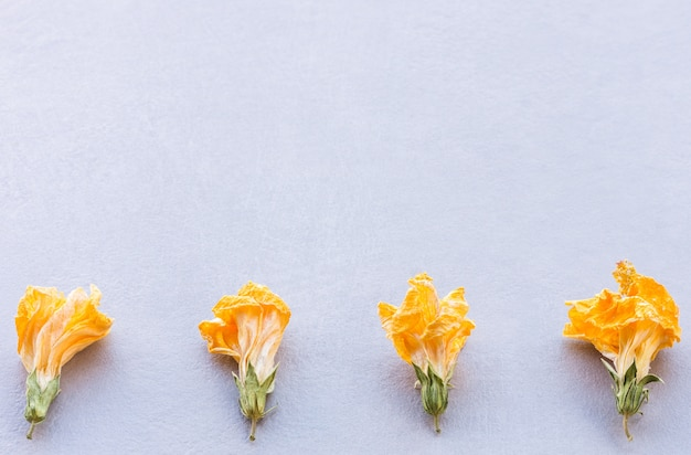 Composição horizontal de quatro flores secas amarelas dispostas em linha na parte inferior em um fundo cinza texturizado com luz natural suave