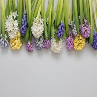 Composição linear de belas flores de verão jacinto com hastes e círculos de plantas florais