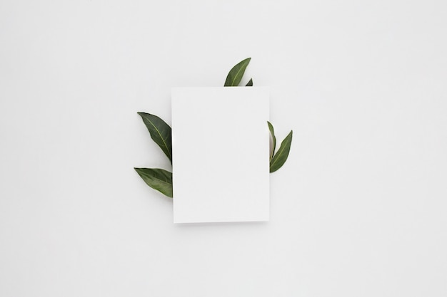Composição mínima com um papel em branco com folhas verdes, vista superior