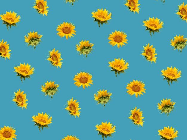 Composição mínima de fundo padrão de girassóis amarelos frescos em azul negrito. conceito de jardinagem de verão. vista isométrica.
