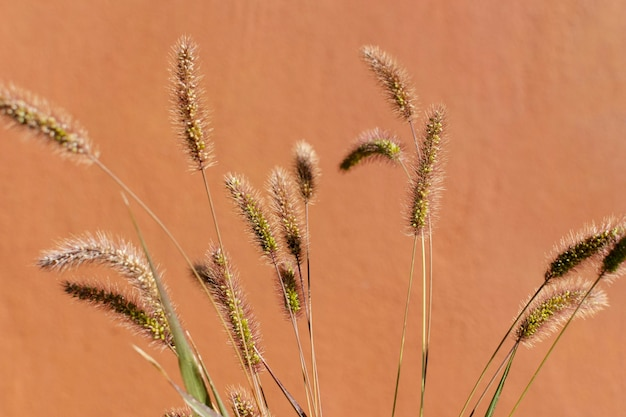 Composição minimalista de planta natural em fundo monocromático