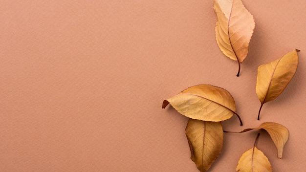 Composição monocromática de natureza morta com folhas