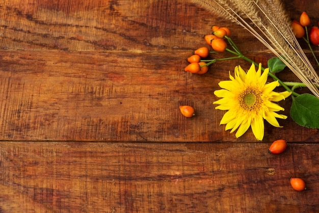 Composição plana com espigas de trigo, bagas de roseira brava e girassol em uma mesa de madeira