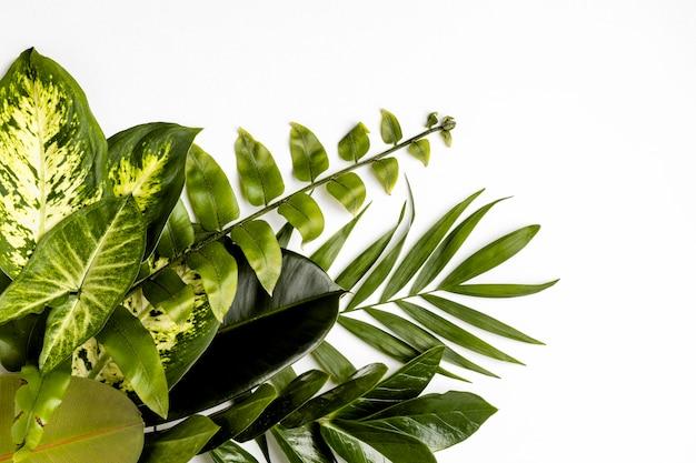 Composição plana de folhas verdes