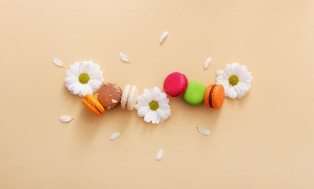 Composição plana de macaroons franceses coloridos, flores brancas e pétalas