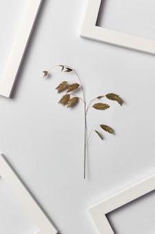 Composição vegetativa com quadros vazios para o seu texto e inflorescência de folha orgânica em uma parede cinza clara. vista do topo.