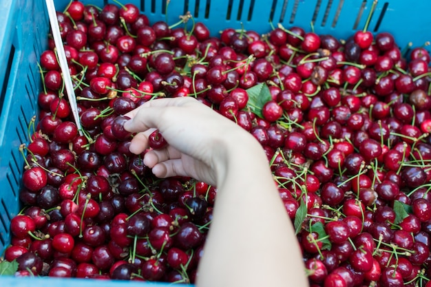 Compra de cerejas no mercado