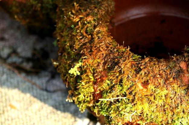 Compre musgo para plantas de jardim
