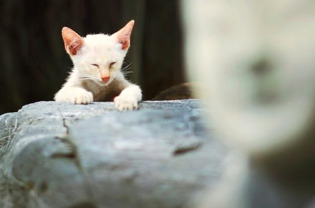 Conceito animal adorável da vaquinha do gato